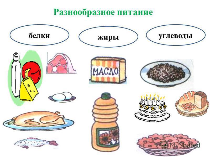 Разнообразное питание белки жиры углеводы