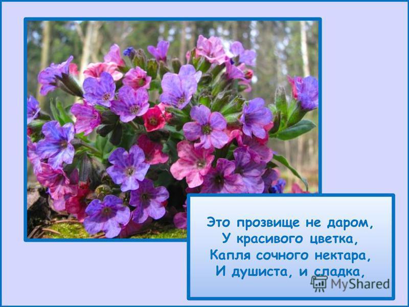 Это прозвище не даром, У красивого цветка, Капля сочного нектара, И душиста, и сладка,