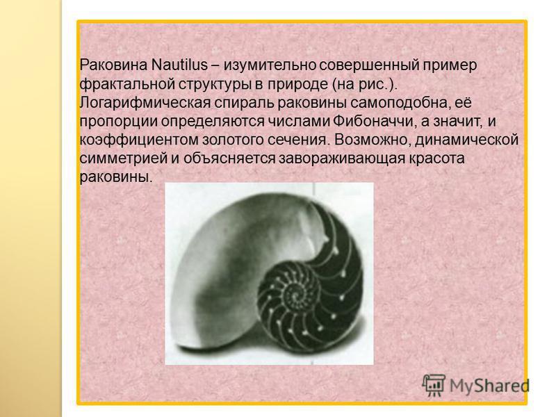 Раковина Nautilus – изумительно совершенный пример фрактальной структуры в природе (на рис.). Логарифмическая спираль раковины самоподобна, её пропорции определяются числами Фибоначчи, а значит, и коэффициентом золотого сечения. Возможно, динамическо