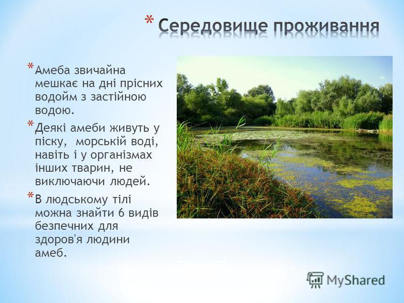 * Амеба звичайна мешкає на дні прісних водойм з застійною водою. * Деякі амеби живуть у піску, морській воді, навіть і у організмах інших тварин, не виключаючи людей. * В людському тілі можна знайти 6 видів безпечних для здоров'я людини амеб.