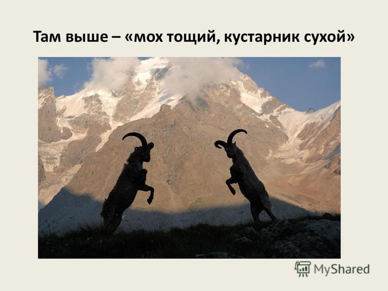 Орлы …В синей дымке даль, Где парит орел – Страж высоких гор.