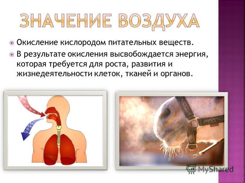 Окисление кислородом питательных веществ. В результате окисления высвобождается энергия, которая требуется для роста, развития и жизнедеятельности клеток, тканей и органов.