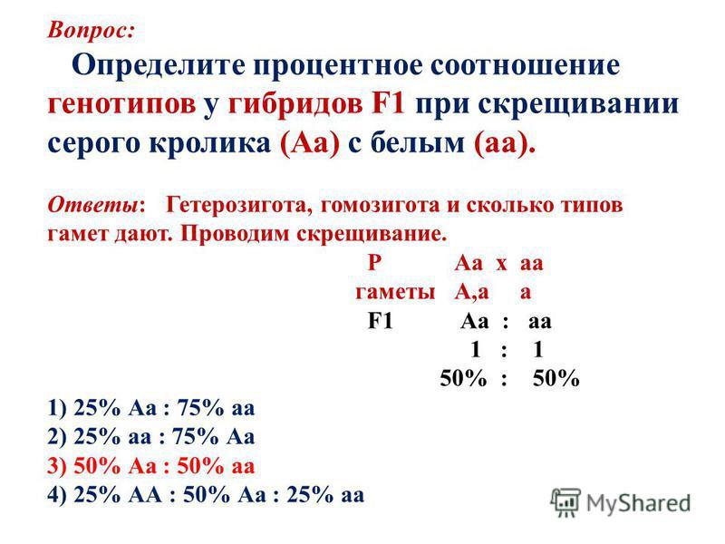 Вопрос: Определите процентное соотношение генотипов у гибридов F1 при скрещивании серого кролика (Аа) с белым (а). Ответы: Гетерозигота, гомозигота и сколько типов гамет дают. Проводим скрещивание. Р Аа х а гаметы А,а а F1 Аа : а 1 : 1 50% : 50% 1) 2