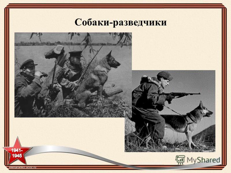 Собаки-разведчики