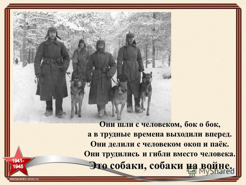 Они шли с человеком, бок о бок, а в трудные времена выходили вперед. Они делили с человеком окоп и паёк. Они трудились и гибли вместо человека. Это собаки, собаки на войне.