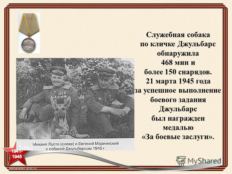 Служебная собака по кличке Джульбарс обнаружила 468 мин и более 150 снарядов. 21 марта 1945 года за успешное выполнение боевого задания Джульбарс был награжден медалью «За боевые заслуги».