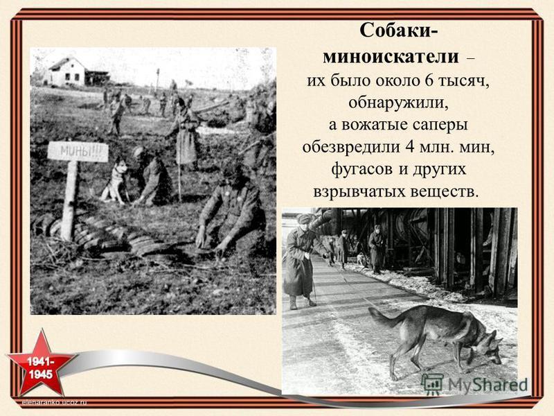 Собаки- миноискатели – их было около 6 тысяч, обнаружили, а вожатые саперы обезвредили 4 млн. мин, фугасов и других взрывчатых веществ.