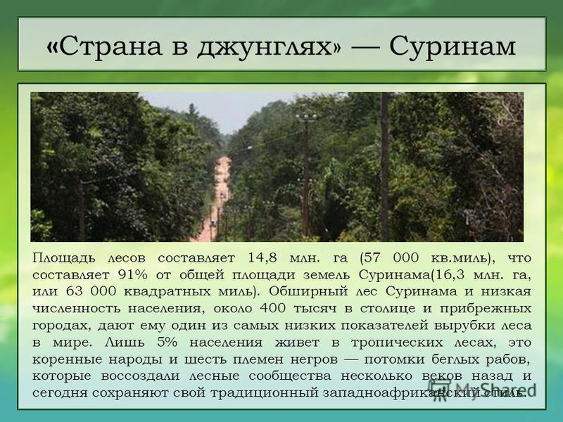 Площадь лесов составляет 14,8 млн. га (57 000 кв.миль), что составляет 91% от общей площади земель Суринама(16,3 млн. га, или 63 000 квадратных миль). Обширный лес Суринама и низкая численность населения, около 400 тысяч в столице и прибрежных города