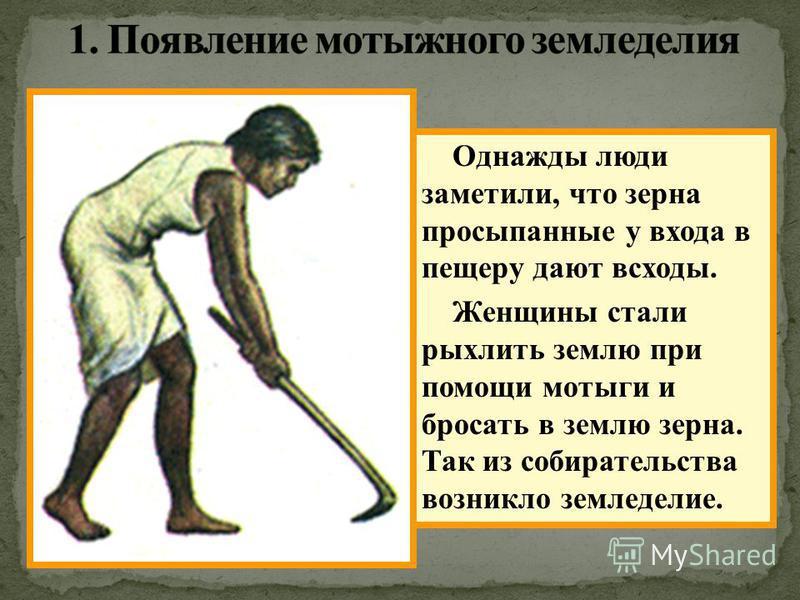 Однажды люди заметили, что зерна просыпанные у входа в пещеру дают всходы. Женщины стали рыхлить землю при помощи мотыги и бросать в землю зерна. Так из собирательства возникло земледелие.