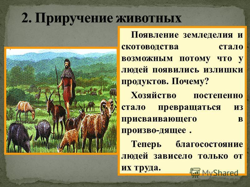 В это же время появилось скотоводство. Мужчины возвращаясь с охоты иногда приводили раненых животных,или детенышей. Первым домашним животным стала собака. Затем были приручены свиньи, козы,овцы и коровы. Появление земледелия и скотоводства стало возм