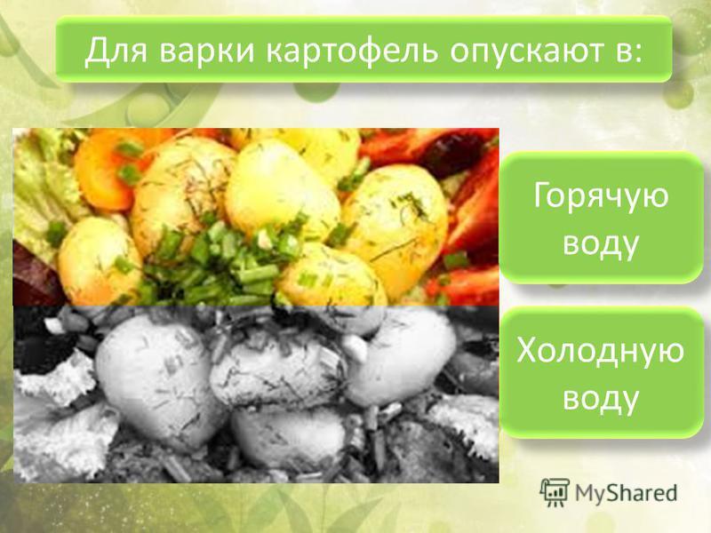 Для варки картофель опускают в: Горячую воду Холодную воду