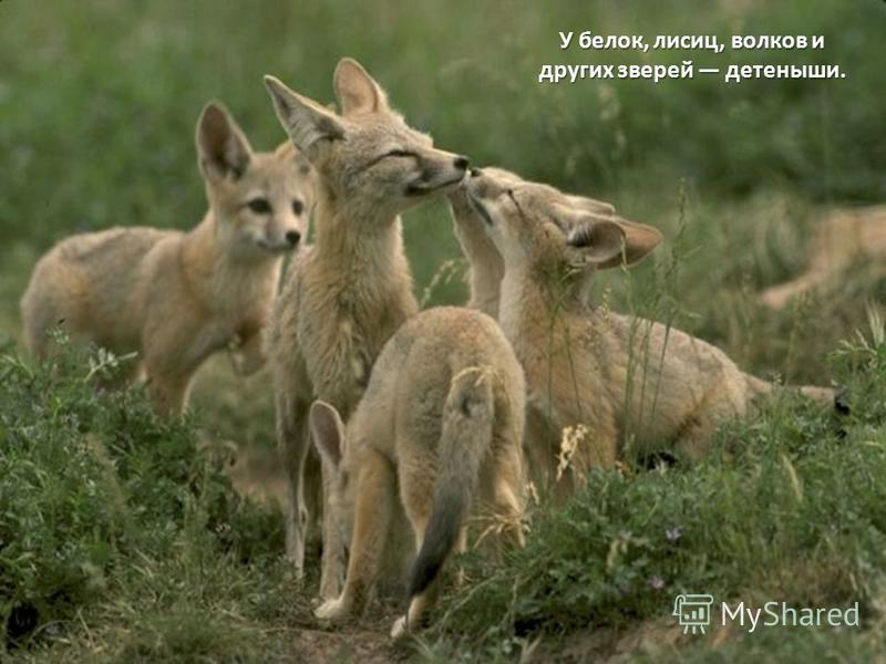 У белок, лисиц, волков и других зверей детеныши.