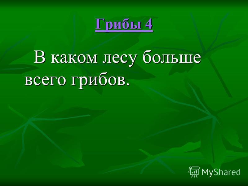 Грибы 4 Грибы 4 В каком лесу больше всего грибов. В каком лесу больше всего грибов.