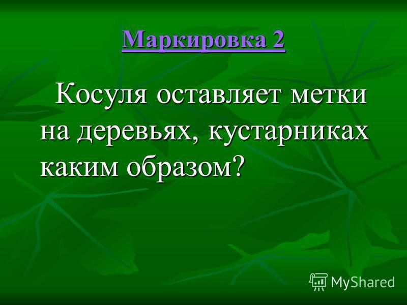Маркировка 2 Маркировка 2 Косуля оставляет метки на деревьях, кустарниках каким образом? Косуля оставляет метки на деревьях, кустарниках каким образом?