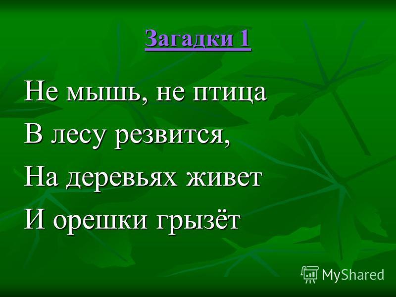 Загадки 1 Загадки 1 Не мышь, не птица В лесу резвится, На деревьях живет И орешки грызёт