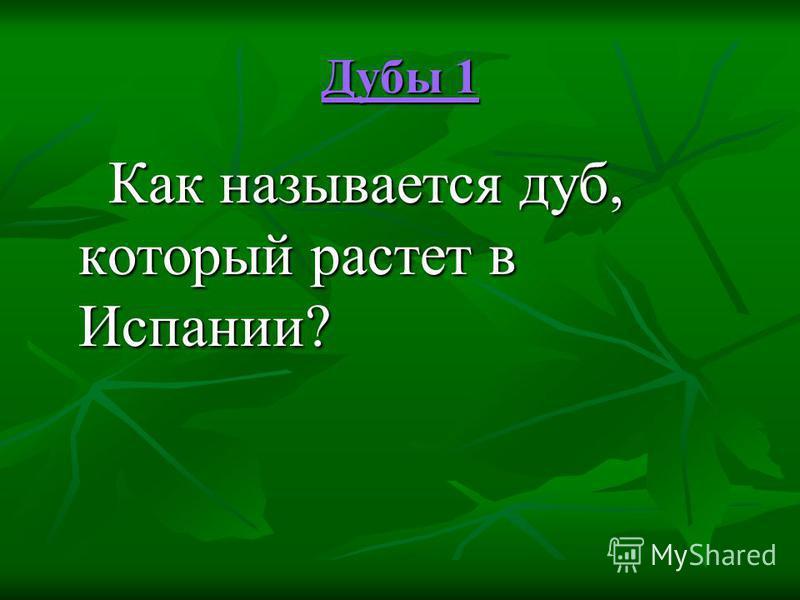 Дубы 1 Дубы 1 Как называется дуб, который растет в Испании? Как называется дуб, который растет в Испании?