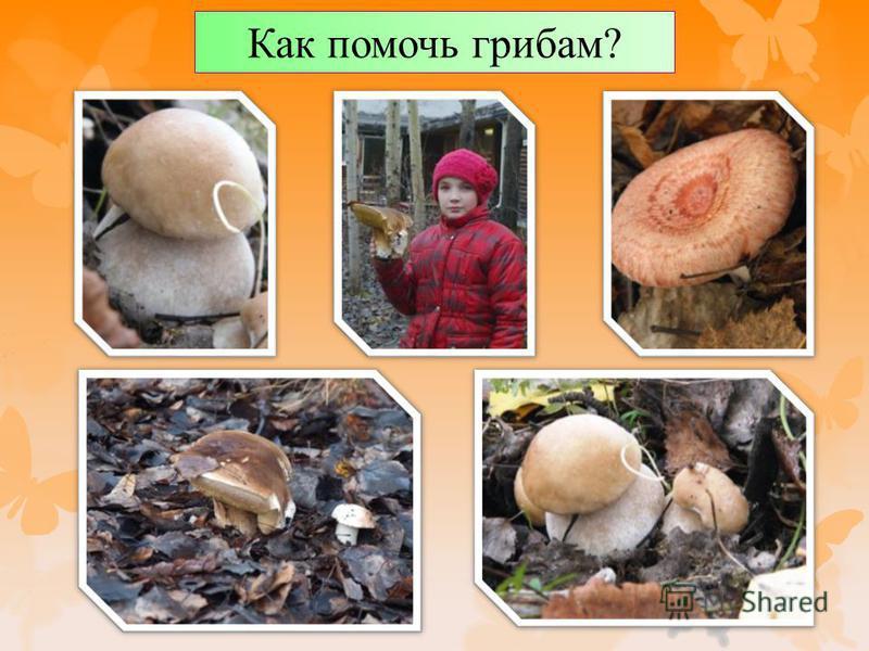 Как помочь грибам?