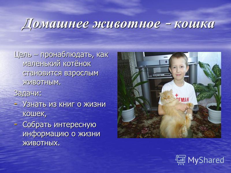 Домашнее животное - кошка Домашнее животное - кошка Цель – пронаблюдать, как маленький котёнок становится взрослым животным. Задачи: - Узнать из книг о жизни кошек, - Собрать интересную информацию о жизни животных.