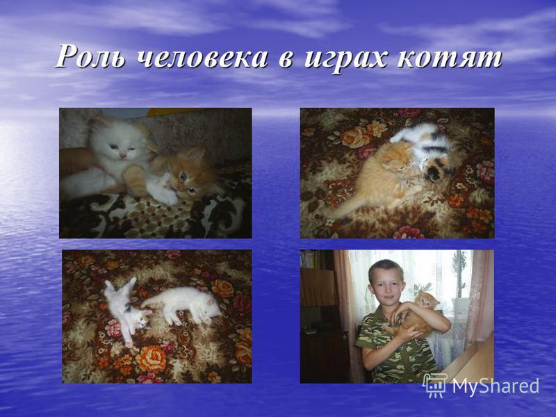 Роль человека в играх котят Роль человека в играх котят