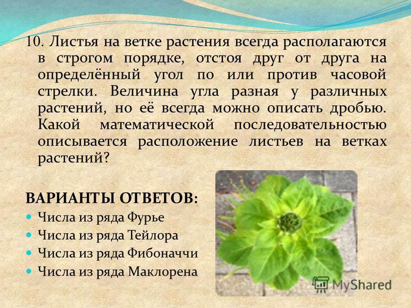 10. Листья на ветке растения всегда располагаются в строгом порядке, отстоя друг от друга на определённый угол по или против часовой стрелки. Величина угла разная у различных растений, но её всегда можно описать дробью. Какой математической последова