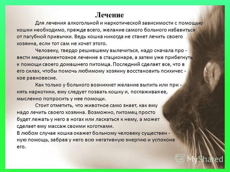 Лечение Для лечения алкогольной и наркотической зависимости с помощью кошки необходимо, прежде всего, желание самого больного избавиться от пагубной привычки. Ведь кошка никогда не станет лечить своего хозяина, если тот сам не хочет этого. Человеку,