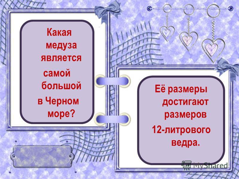 Какая медуза является самой большой в Черном море? Её размеры достигают размеров 12-литрового ведра.