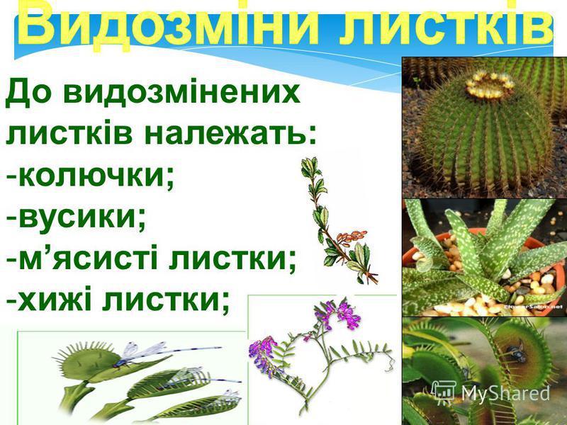 На відміну від звичайних листкових пластинок, рослини мають видозмінені листки, як пристосування до певних умов існування та доступності до води і світла.