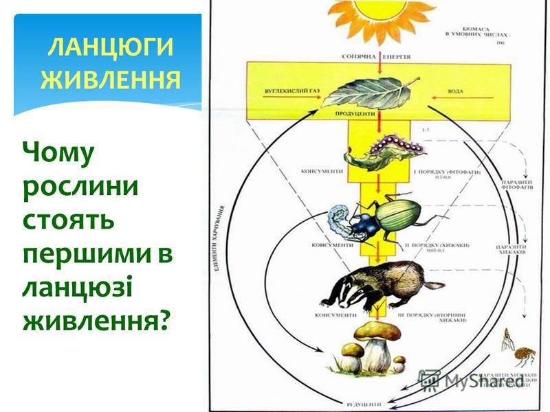 Біологічний ребус: Сонячний промінь упав на зелену рослину, погас, але не зник… Лабораторія зеленого листка.