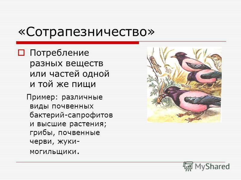 «Нахлебничество» Это потребление остатков пищи хозяина. Пример: львы и гиены; дельфины, акулы и рыбы- прилипалы; рыбы- лоцманы.