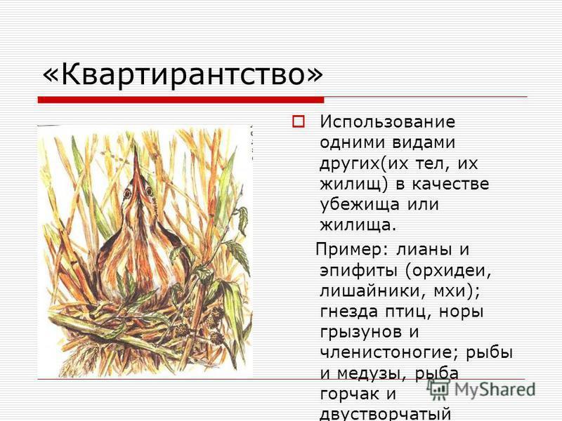 «Сотрапезничество» Потребление разных веществ или частей одной и той же пищи Пример: различные виды почвенных бактерий-сапрофитов и высшие растения; грибы, почвенные черви, жуки- могильщики.