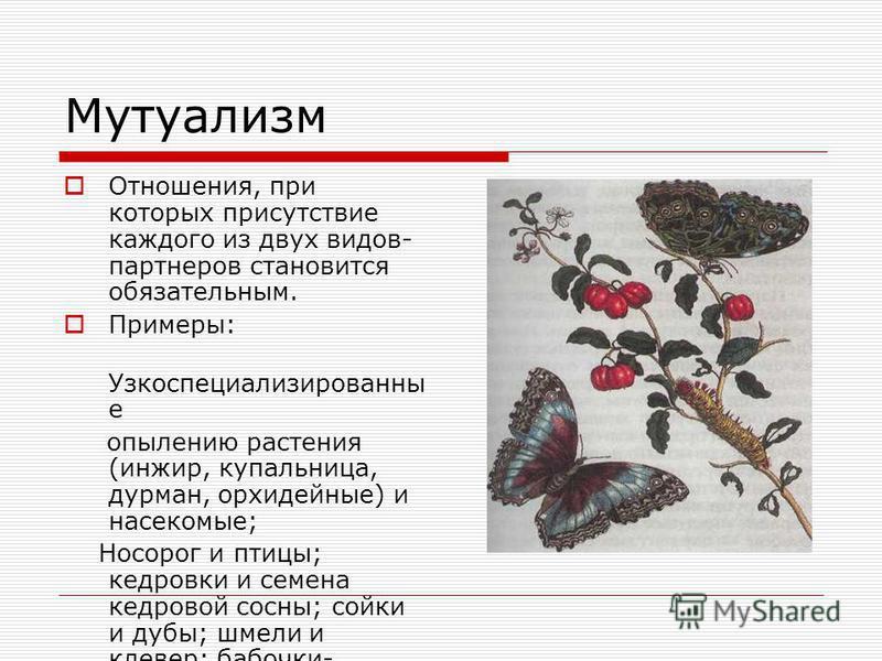 Протокооперация Это совместное, хотя и необязательное существование обоих видов, но не является непременным условием выживания. Например: цветковые растения и насекомые- опылители; муравьи и семена растений.