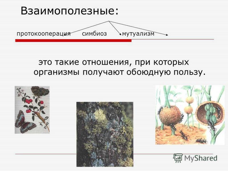 Типы экологических взаимодействий: Полезновредные (+- ): 1. паразитизм 2. хищничество Взаимовредные (--): Конкуренция 1. межвидовая 2.внутривидовая
