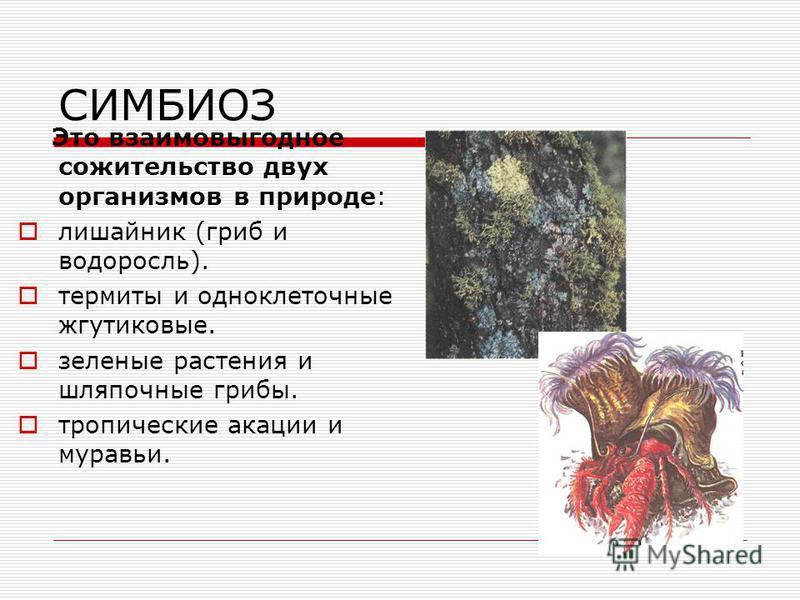 Взаимополезные: протокооперация симбиоз мутуализм это такие отношения, при которых организмы получают обоюдную пользу.