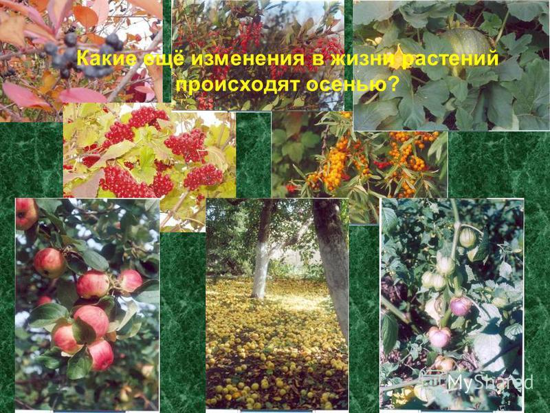 Какие ещё изменения в жизни растений происходят осенью?
