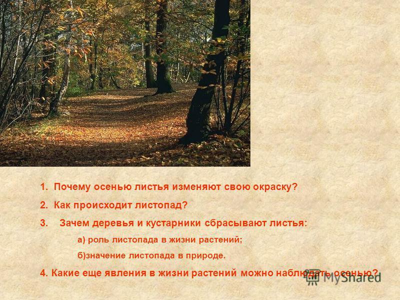 1. Почему осенью листья изменяют свою окраску? 2. Как происходит листопад? 3. Зачем деревья и кустарники сбрасывают листья: а) роль листопада в жизни растений; б)значение листопада в природе. 4. Какие еще явления в жизни растений можно наблюдать осен