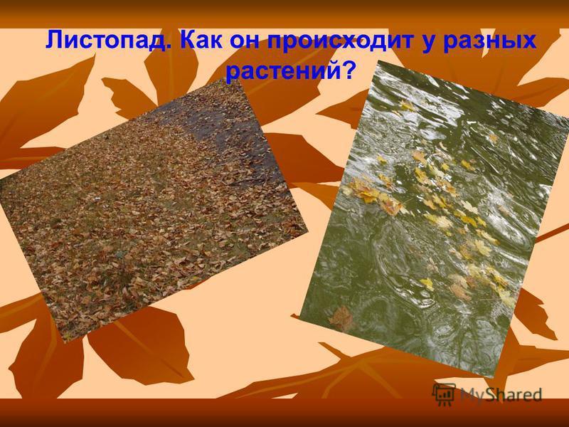 Листопад. Как он происходит у разных растений?