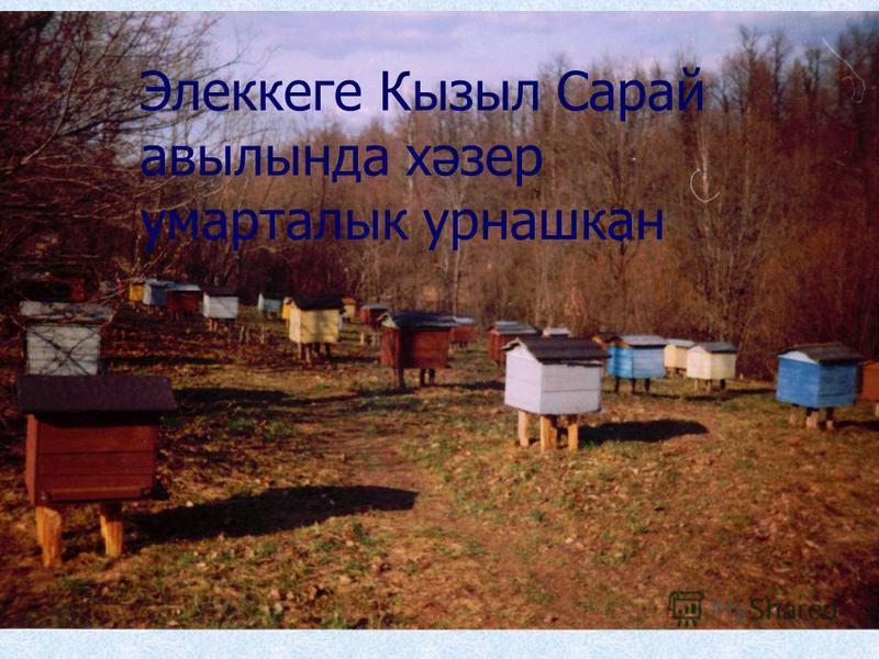 Элеккеге Кызыл Сарай авылында хәзер умарталык урнашкан
