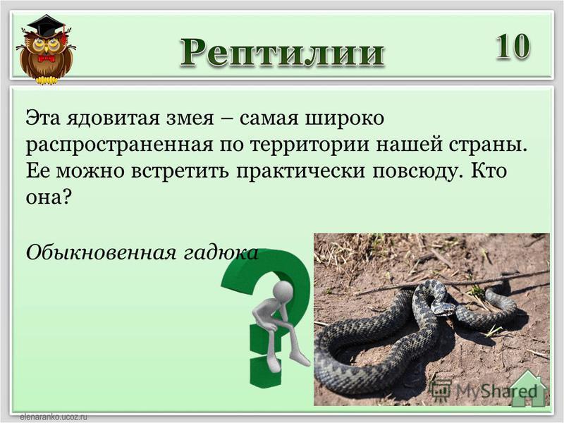Обыкновенная гадюка Эта ядовитая змея – самая широко распространенная по территории нашей страны. Ее можно встретить практически повсюду. Кто она?