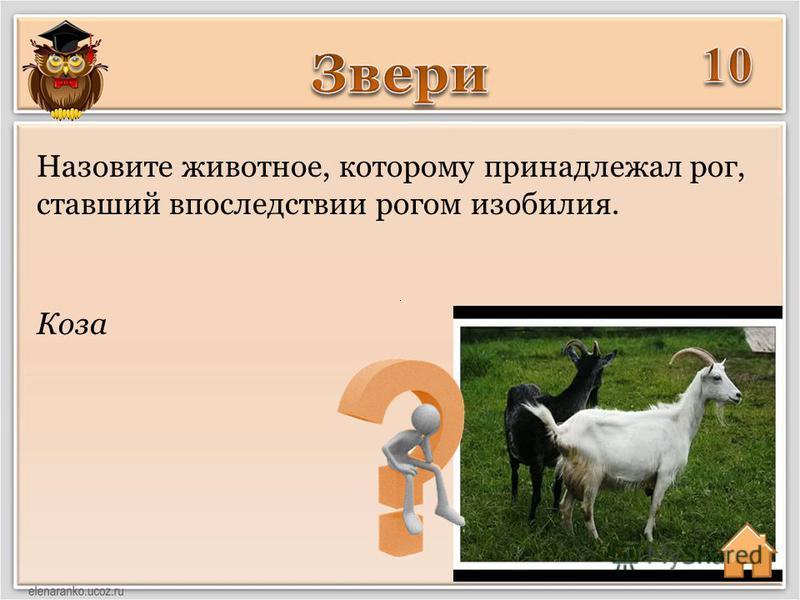 Коза Назовите животное, которому принадлежал рог, ставший впоследствии рогом изобилия.