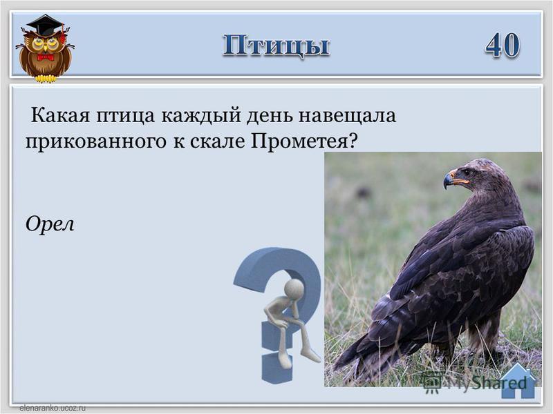 Орел Какая птица каждый день навещала прикованного к скале Прометея?