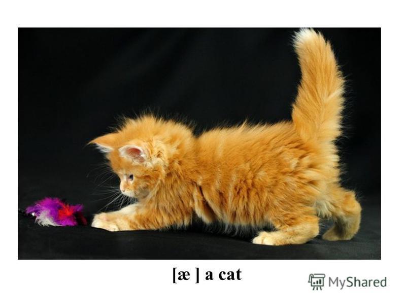 [æ ] a cat