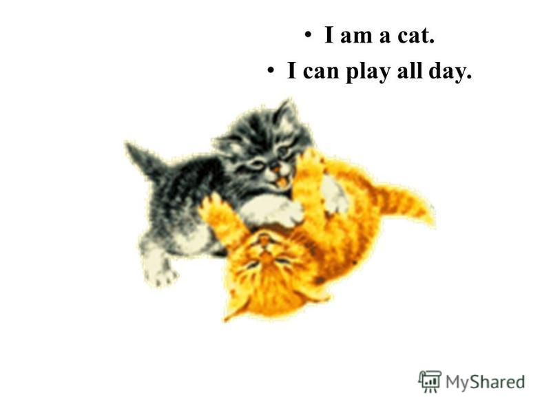 I am a cat. I can play all day.
