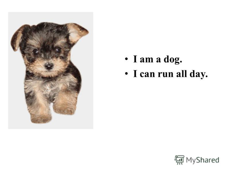 I am a dog. I can run all day.
