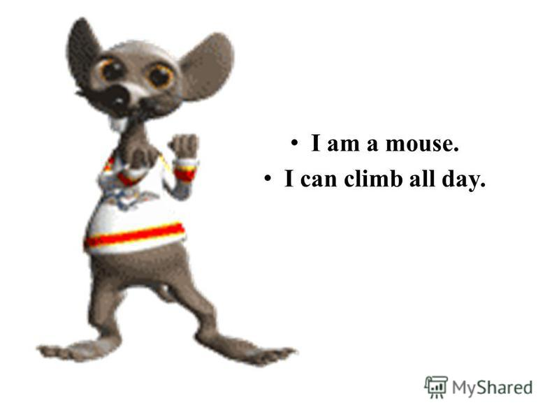 I am a mouse. I can climb all day.