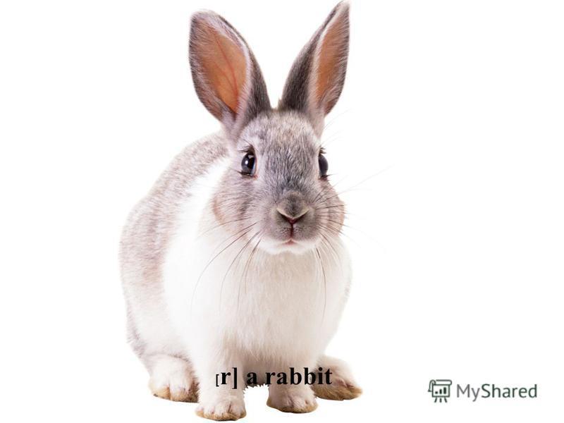 [ r] a rabbit