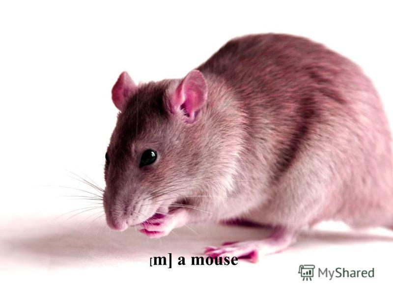 [ m] a mouse