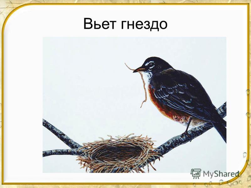 Вьет гнездо
