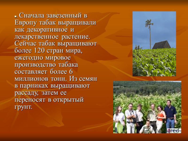 . Сначала завезенный в Европу табак выращивали как декоративное и лекарственное растение. Сейчас табак выращивают более 120 стран мира, ежегодно мировое производство табака составляет более 6 миллионов тонн. Из семян в парниках выращивают рассаду, за