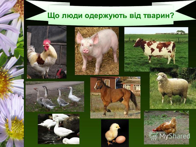 Що люди одержують від тварин?