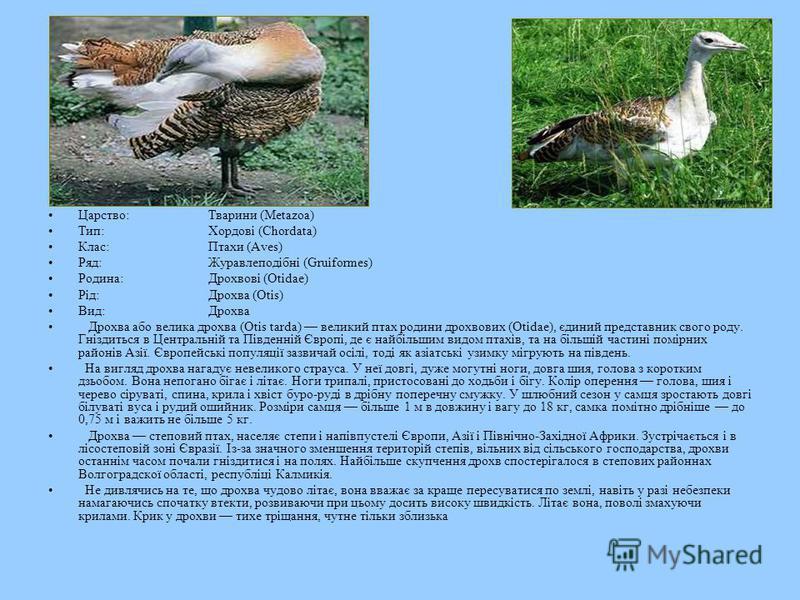 Царство:Тварини (Metazoa) Тип:Хордові (Chordata) Клас:Птахи (Aves) Ряд:Журавлеподібні (Gruiformes) Родина:Дрохвові (Otidae) Рід:Дрохва (Otis) Вид:Дрохва Дрохва або велика дрохва (Otis tarda) великий птах родини дрохвових (Otidae), єдиний представник